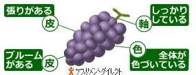 miwake_grape